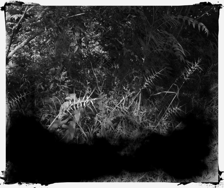 2014_DrivewayKoloid