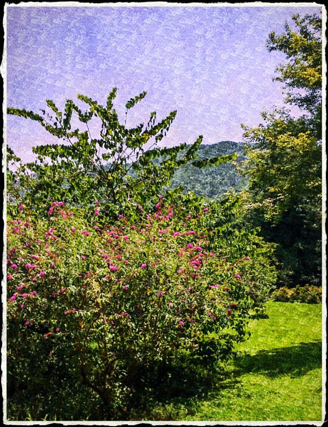JanetM_03_LandscapePhotocopier